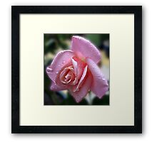 The Magic of Raindrops - Rose in the Rain Framed Print