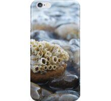Barnacles iPhone Case/Skin