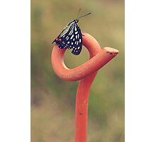 Black Butterfly with White and Orange Markings on Metal Pole Photographic Print
