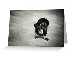 Black and White Portrait of Dachshund Dog Greeting Card