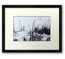 Cattails in snow B&W Framed Print