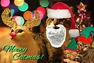 Meowy Catmas! by Margaret Bryant