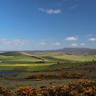 springtime in Tassie - midlands by gaylene