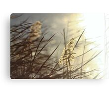 Rushes & Water ( Vintage December Light) Canvas Print