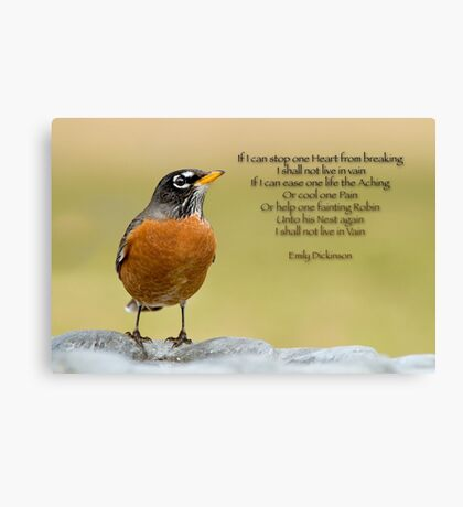 Emily Dickinson's Robin Canvas Print