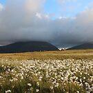 Hoy Hills from Graemsay by Fiona MacNab
