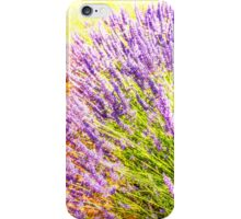 Lavender field iPhone Case/Skin