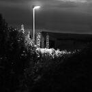 The dark path. by Paul Pasco