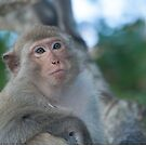 Relaxed macaque by stuwdamdorp