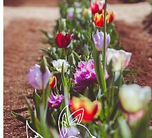 Tulips and little Fox by sgbphotos