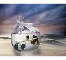 2 Lost Souls Living in a Fishbowl Photographic Print