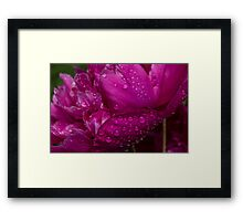 Petals and Drops - Magenta Glow Framed Print