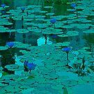 Forgiveness in Serene Pond by Nira Dabush