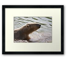 Clean Bear Framed Print