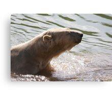 Clean Bear Canvas Print