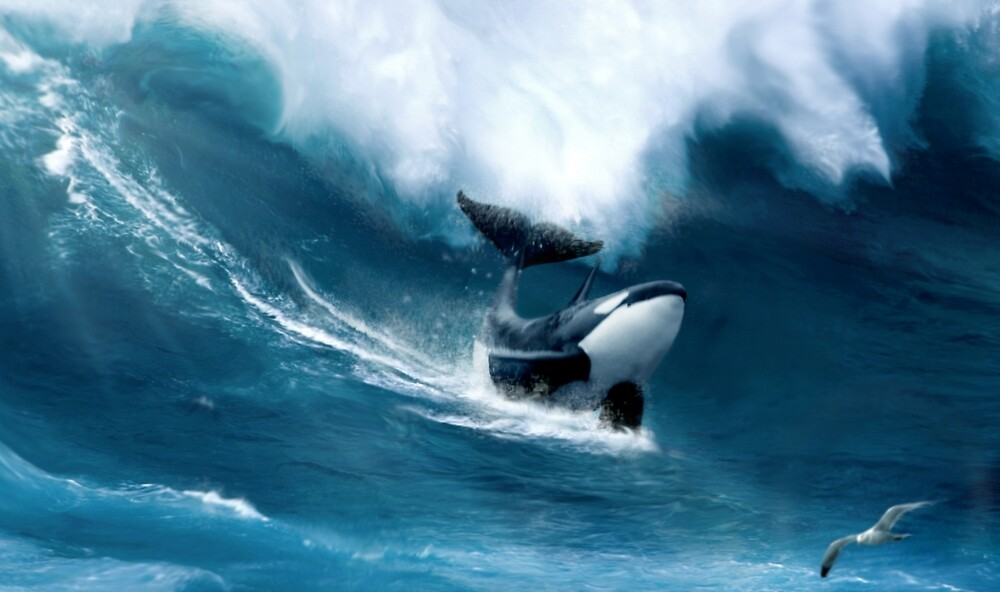 Killer Surf by Cliff Vestergaard
