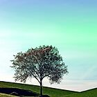 Lonely tree in the middle of nowhere | landscape photography by Patrick Jobst