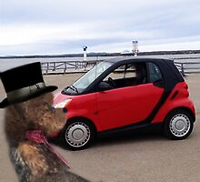 SMART BEARS DRIVE SMART CARS by ✿✿ Bonita ✿✿ ђєℓℓσ