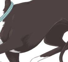 Italian Greyhound - Coral Dog Pink Background / iggy diva prance trot run sighthound whippet greyhound race racer art illustration Sticker
