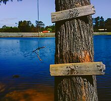 Rope swing hanging from tree above lake by wellfinished