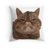 Evie the exotic short haired cat Throw Pillow