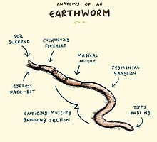 Anatomy of an Earthworm by Sophie Corrigan