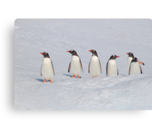 Gentoo Penguins in Conference Canvas Print