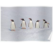 Gentoo Penguins in Conference Poster