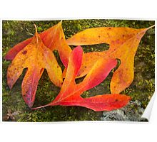 Colorful Fallen Leaves Poster