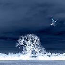 Blue Heron Day in Winter by MigBardsley