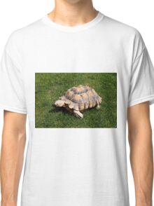 Tortoise 2 at the zoo Classic T-Shirt