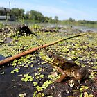 Frog at the Swamp! by Barberelli