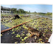 Frog at the Swamp! Poster