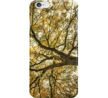 Acacia iPhone Case/Skin