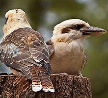 Kookaburras by Peter Sucy