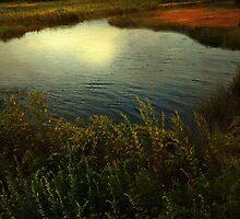 September Moon over Salt Marsh by RC deWinter