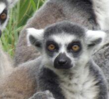 Lemur Family Group Sticker