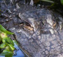Alligator (Alligator Mississippiensis)  Sticker