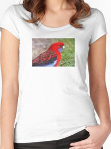 Crimson Rosella Women's Fitted Scoop T-Shirt