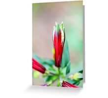 Festive Colours Greeting Card