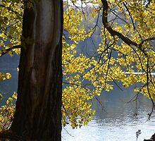 Backlit Autumn Tree by Kathleen Brant