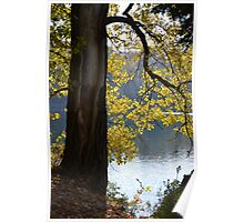 Backlit Autumn Tree Poster