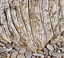 Pebbles and Driftwood Abstract by Peter Sucy