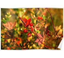 Autumn Berries Poster