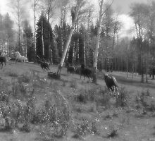 Horse Herd Running in Wooded Pasture on BC Ranch by Skye Ryan-Evans