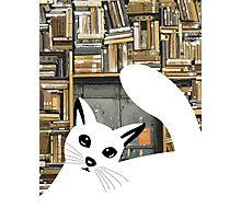 Curious Cat I  Photographic Print