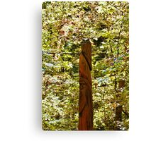 Trail Carving Canvas Print
