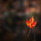 Autumn by indiabluephotos