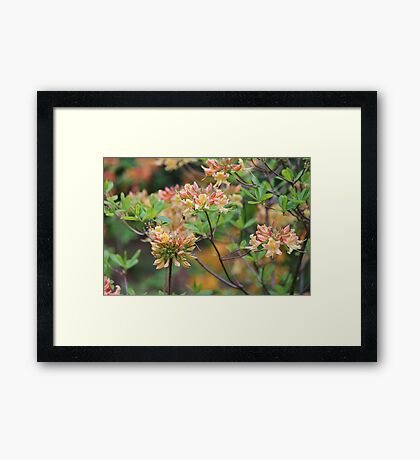 Growing In The Woods Framed Print