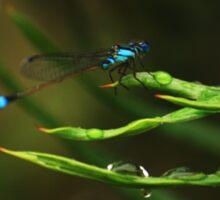 Blue Dragon Fly Sticker